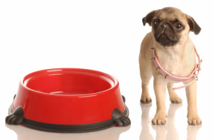 7 Healthy Tips for Pug Dieting