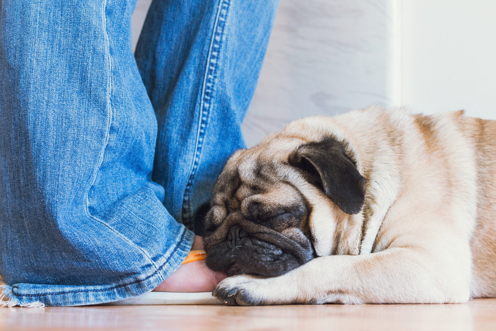 Common Neurological Disorders in Dogs