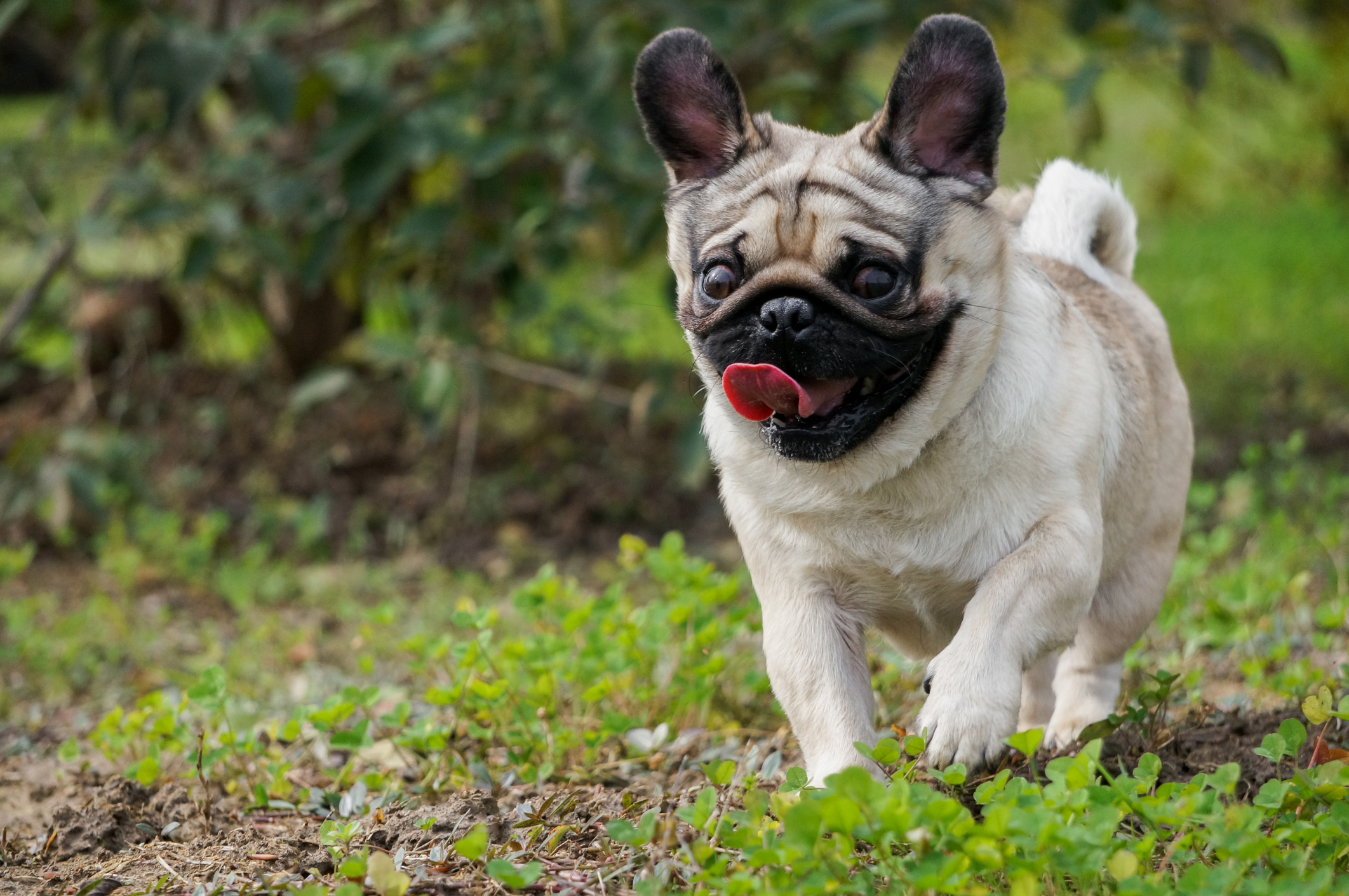 Dog Genetics and Health Issues to Be Aware Of